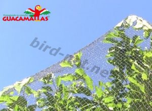 bird net used on tree for protection
