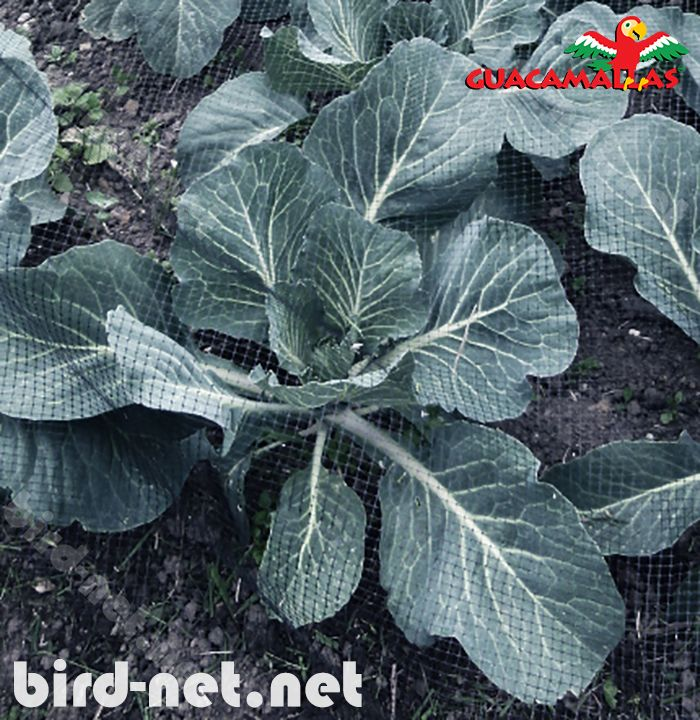 bird netting is a vital resource for gardeners to defend their crops