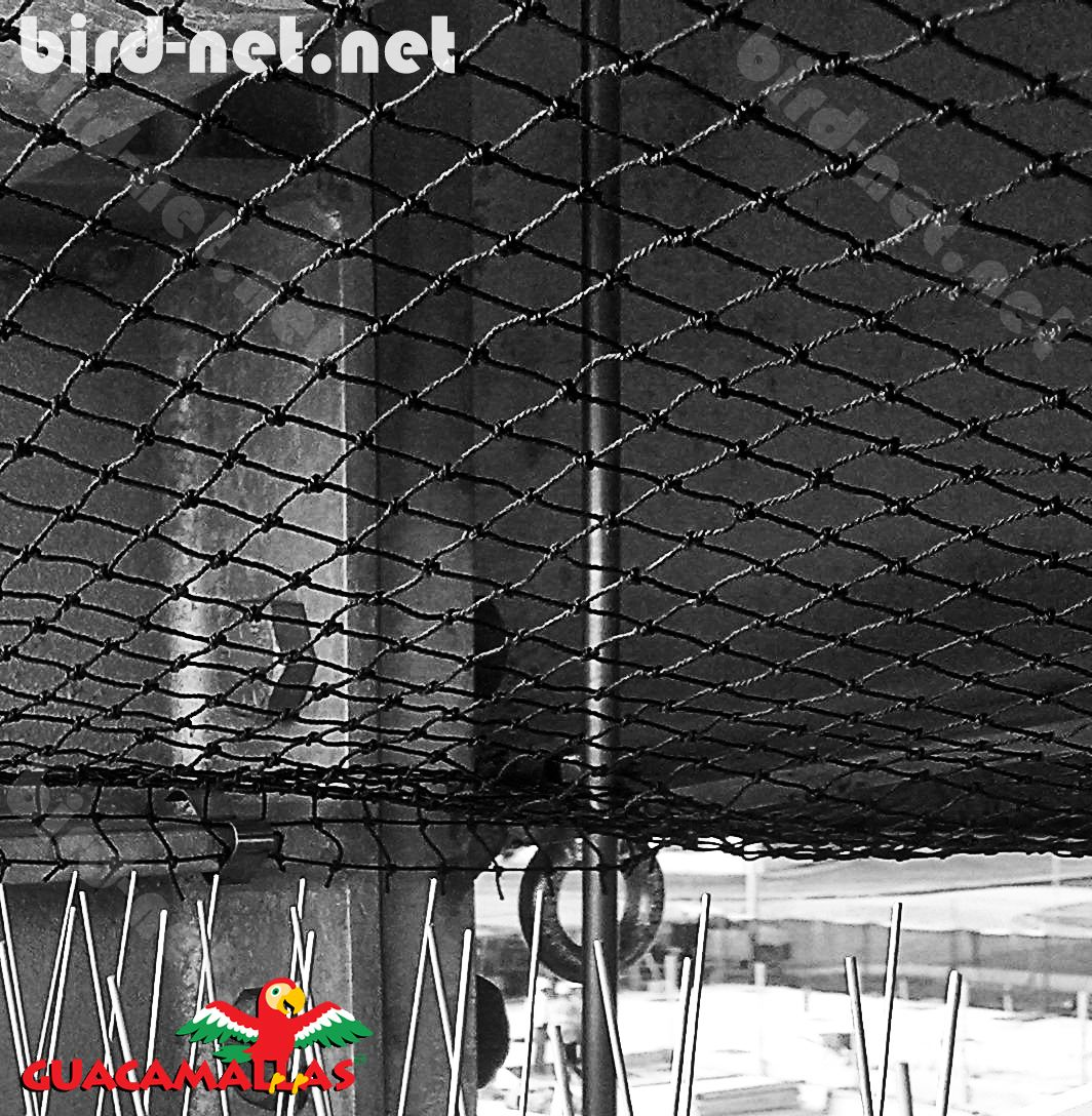 Netting results the best method to prevent bird damages